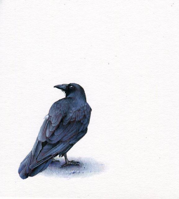 Dina Brodsky, 'Raven', 2019, Garvey | Simon