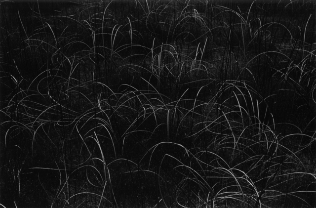 , 'Grasses, Wisconsin,' 1958, Etherton Gallery