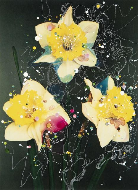 Sebastiaan Bremer, 'Bicolor Trumpet Daffodil Queen of Bicolors II', 2019, Edwynn Houk Gallery