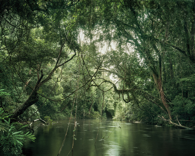 , 'Primary forest 01, waterway, Malaysia,' 2012, Galerie f5,6
