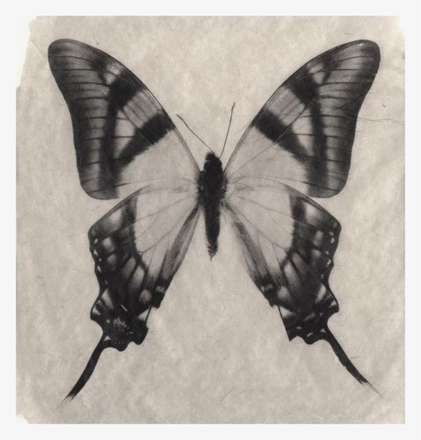 , 'Schmetterling No. 2,' 2016, Galerie Commeter / Persiehl & Heine