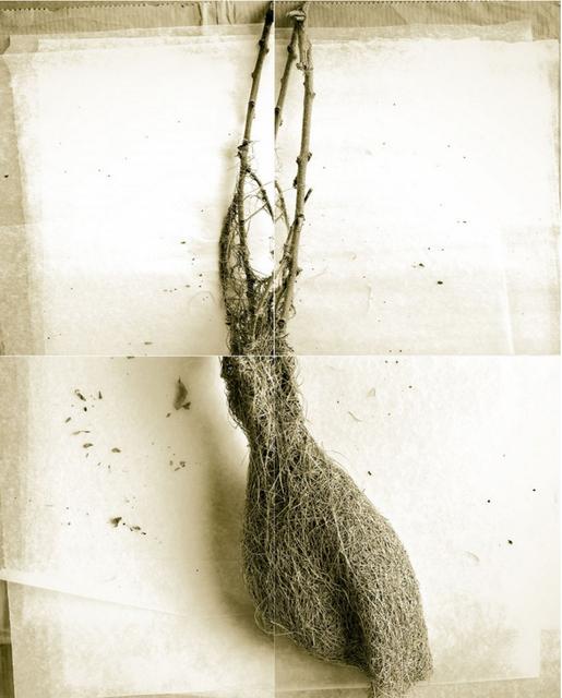 Laurie Rubin, 'Long Weaver Bird Nest', Chicago Art Source