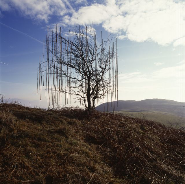Andy Goldsworthy, Marta Moriarty
