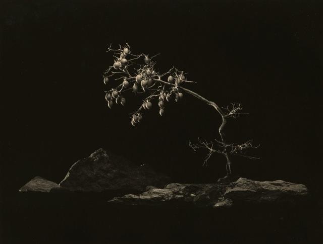 , 'Bonsai #4006,' 2018, Jackson Fine Art