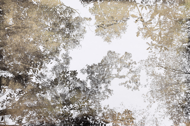 Bill Claps, 'Jungle Canopy III', 2015, Laurent Marthaler Contemporary