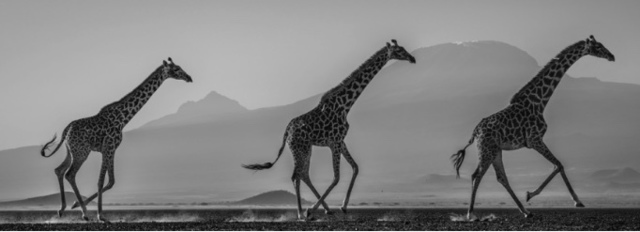 David Yarrow, 'The Kilimanjaro 3', Isabella Garrucho Fine Art