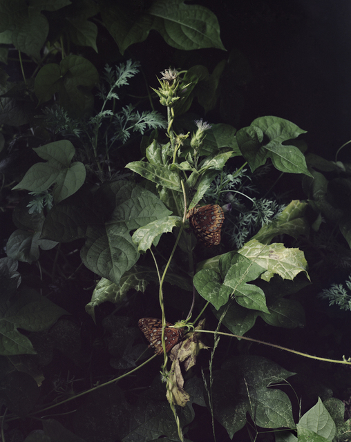 , 'Untitled 3 (From the Series Understory),' 2015, Yancey Richardson Gallery