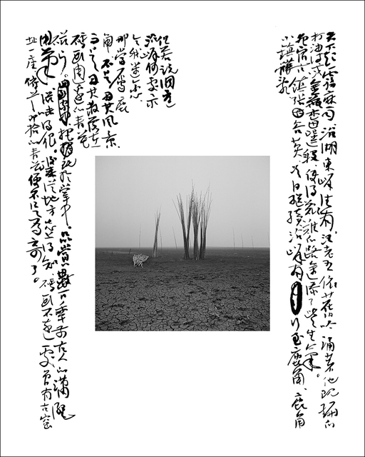 , 'Withered Bamboo in the Beach,' 2010, see+ Gallery