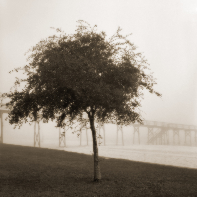 , 'Tree with Pier,'  2000-2005, Paraphé