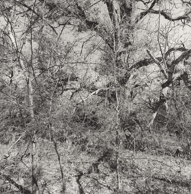 , 'Muleshoe Ranch Preserve, Arizona,' 1999, Pace/MacGill Gallery
