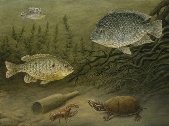 William Montgomery, 'Fish & Musk Turtle', ca. 2019, Davis Gallery & Framing