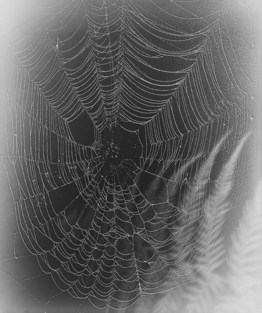 , 'Web Study #29,' 2015, Von Lintel Gallery