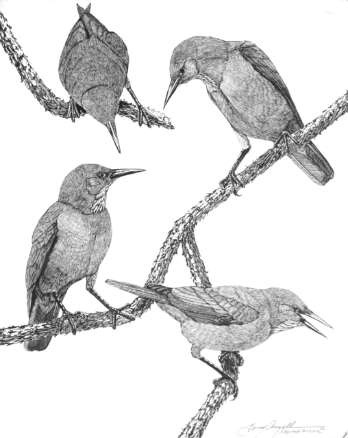 Tony Angell, 'Pinyon Jays', 1976, Foster/White Gallery