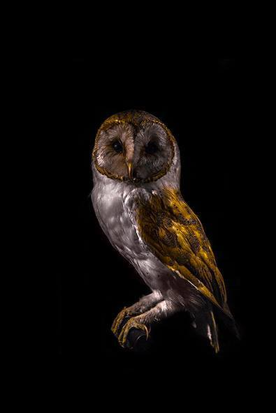 , 'Oiseau XIV,' 2016, Fotospot