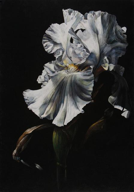 , 'Chiaroscuro II,' , Jonathan Cooper