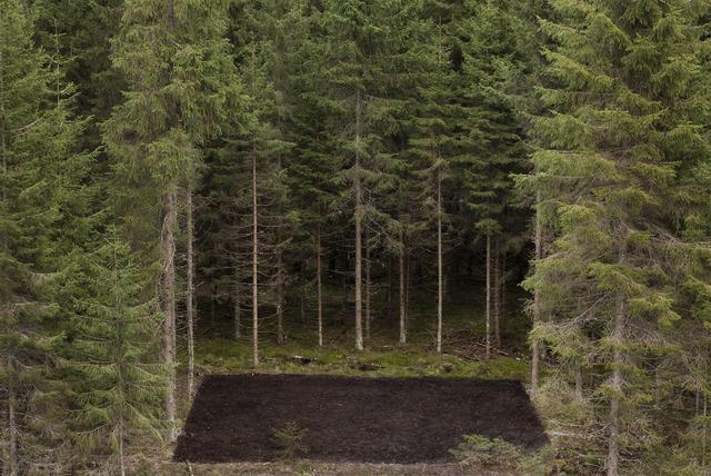 , 'Forest Square II,' 2013, Galerie Anhava
