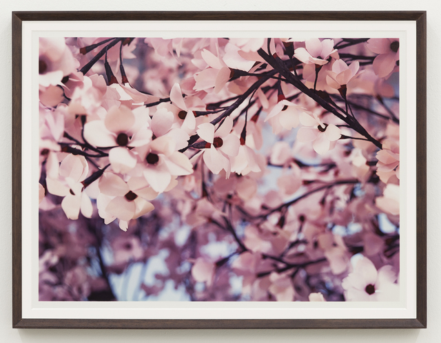 Thomas Demand, 'Blossom VI', 2015, Matthew Marks Gallery