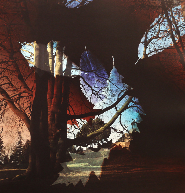 , 'Fallen Leaves, Beaumont-Hamel Newfoundland Memorial, Somme, France,' 2014, Newzones