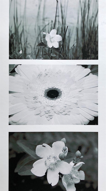 , 'Les Fleurs/Triptych,' 2018, THE WHITE ROOM GALLERY