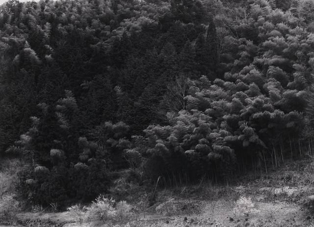 Paul Caponigro, 'Ayabe, Moto-Ise, Bamboo, Japan', 1976, Pucker Gallery