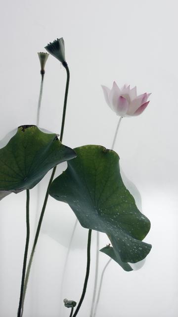 Wu Chi-Tsung, 'Still Life 010 - Lotus', 2018, Galerie du Monde