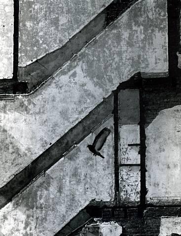 André Kertész, 'Landing Pigeon', 1959, Catherine Couturier Gallery