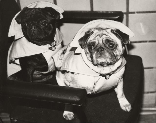 Andy Warhol, 'Dogs in Raincoats', ca. 1985, Christie's Warhol Sale