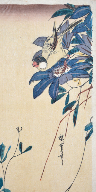, 'Java Sparrow,' ca. 1840, Ronin Gallery