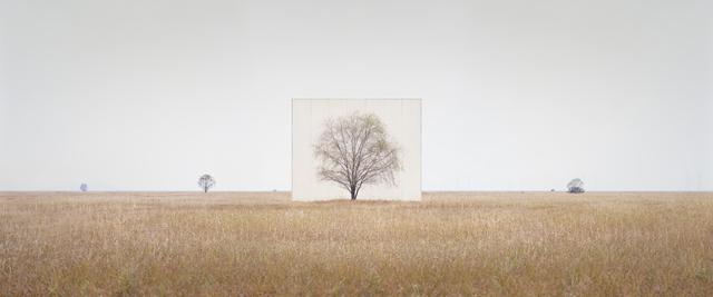 , 'Tree...#3,' 2012, Savina Museum of Contemporary Art