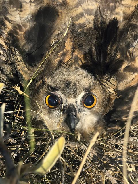 , 'Owl, Hydra 2017,' 2017, Suzanne Tarasieve