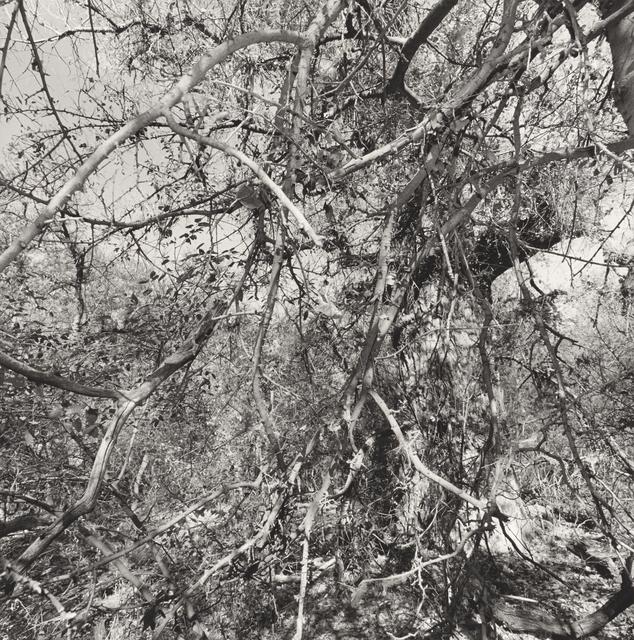 , 'Aravaipa Creek Preserve, Arizona,' 1999, Pace/MacGill Gallery
