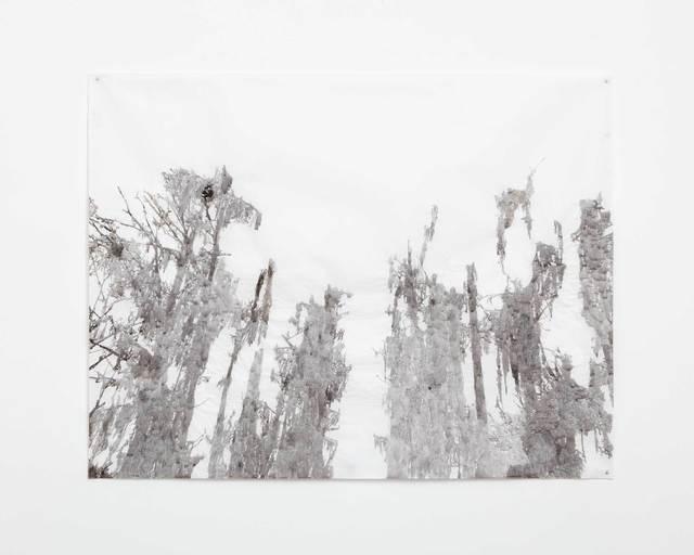 , 'Big Cypress, Caddo,' 2013, Cris Worley Fine Arts