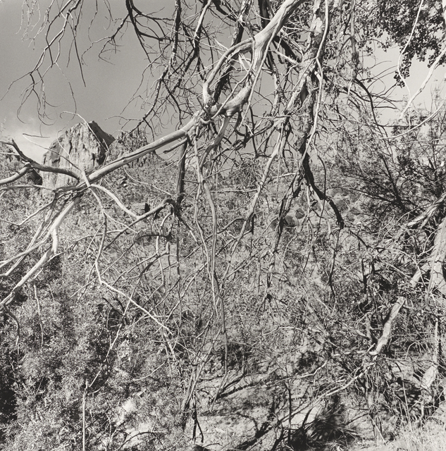 , 'Zion National Park, Utah,' 2003, Pace/MacGill Gallery