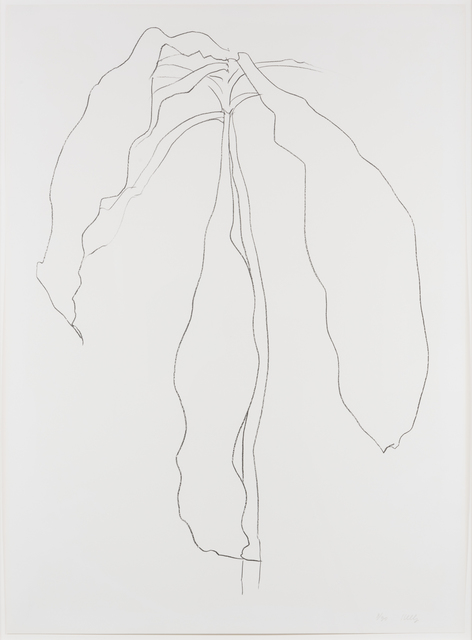 , 'Dracena II, from Series of Plant and Flower Lithographs,' 1983-1985, Leslie Sacks Gallery