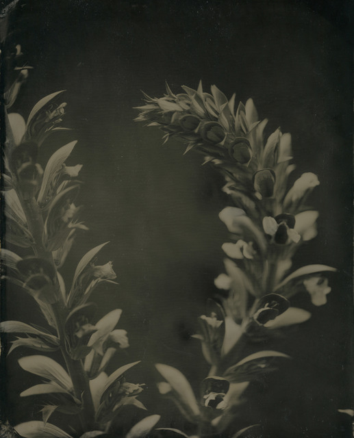 , 'Acanthus #2,' ca. 2008, Gallery NAGA