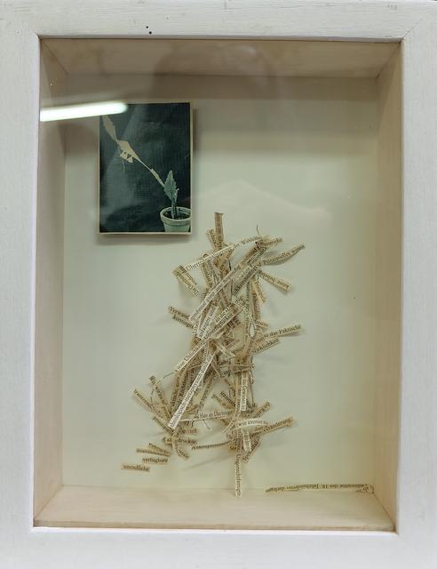 """, '""""Faktische Verwandlung"""" - Metaphase Chromosomen und Einspalter in Holzbox,' 2016, Galerie Brigitte Schenk"""