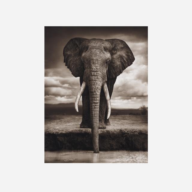 Nick Brandt, 'Elephant Drinking, Amboseli', 2007, Rago/Wright