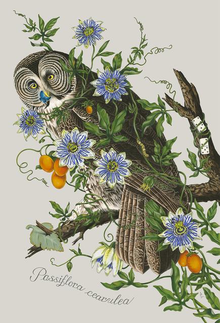 Penelope Gottlieb, 'Passiflora cearulea', 2020, Gerald Peters Gallery