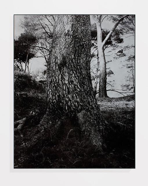 , 'Pins à Luminy,' 1992, Galerie Laurent Godin