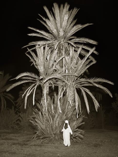 , 'Trees, La Palmeraie, Marrakesh,' 1997, Opiom Gallery