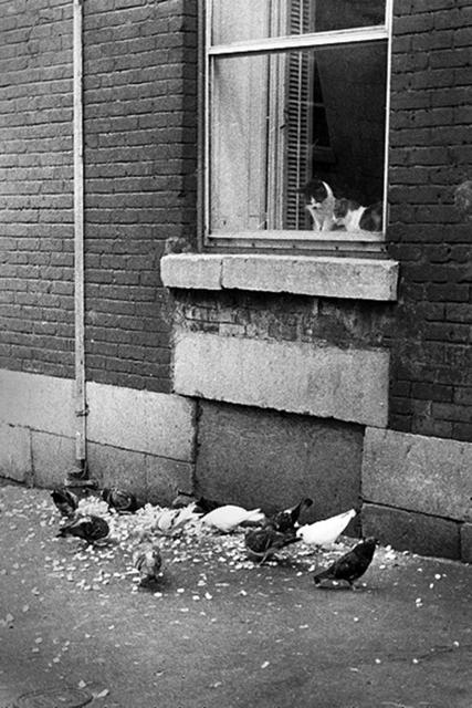 , 'Chats et Pigeons,' 1975, The Print Atelier