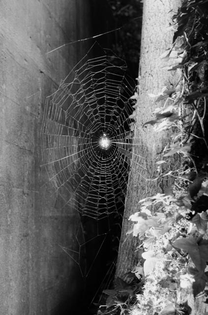 , 'Spinnennetz No.9,' 2004, Lange + Pult