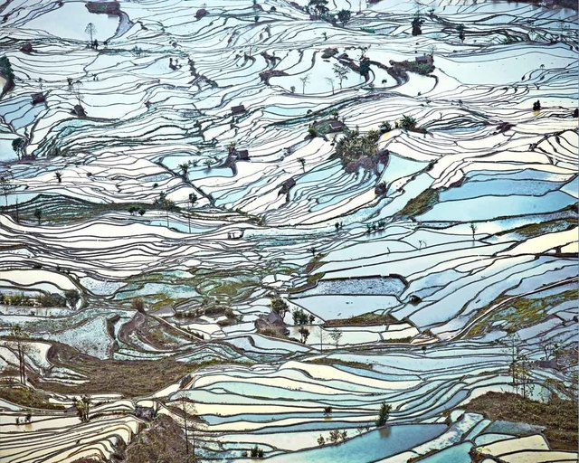 , 'Rice Terraces (Laohuzui II), Yunnan, China,' 2013, Jennifer Kostuik Gallery