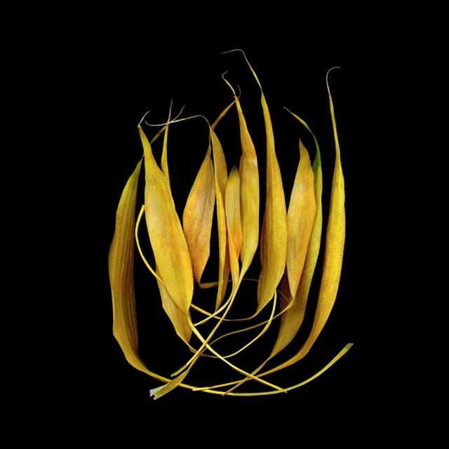 , 'Bamboo,' , Carrie Haddad Gallery