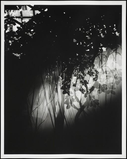 , 'Botanical Garden/ Bronx Zoo XX,' 2015, Galleri Bo Bjerggaard