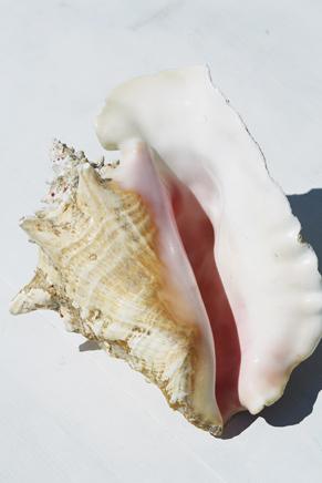 , 'Conch shell,' 2015, Foam Fotografiemuseum Amsterdam