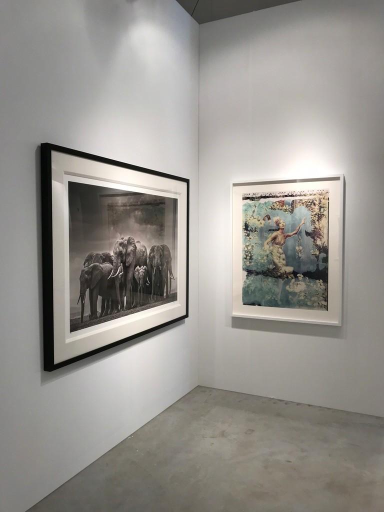 "David Yarrow's ""Circle of Life II, Amboseli, Kenya"", Cathleen Naundorf's  ""An Ordinary Day, Valentino - Haute Couture, Summer 2008"""