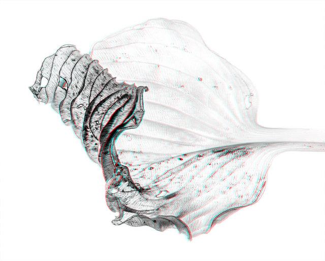 , 'Hosta Leaf,' 2016, Gudberg Nerger