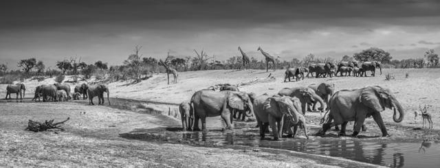 David Yarrow, 'Before Man, Savute, Botswana', 2019, Photography, Archival Pigment Photograph, Holden Luntz Gallery