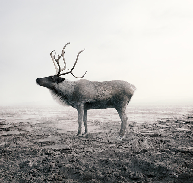 Alice Zilberberg, 'Calm Caribou', 2019, Photography, Photo-based digital painting (Paper - Canson Infinity Rag Photographique), Isabella Garrucho Fine Art